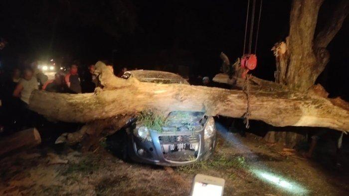 Pohon Tumbang di Pammana Wajo Timpa Mobil yang Melintas