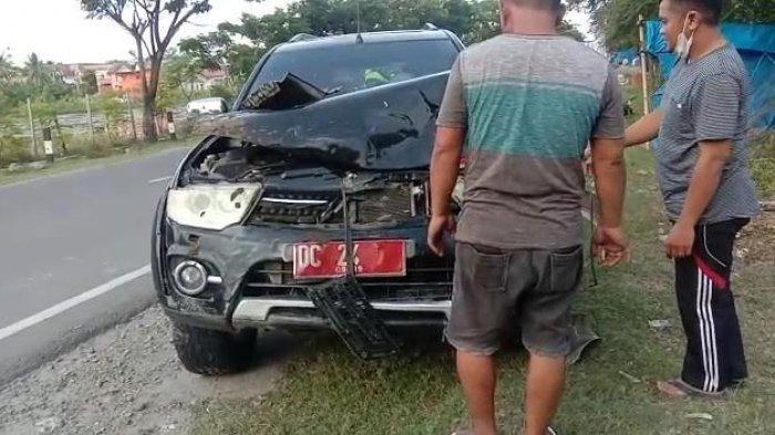Mobil Plat Merah Tabrak Kerbau Hamil Melintas di Jalan Raya Majene, Polisi: Sementara Ditangani