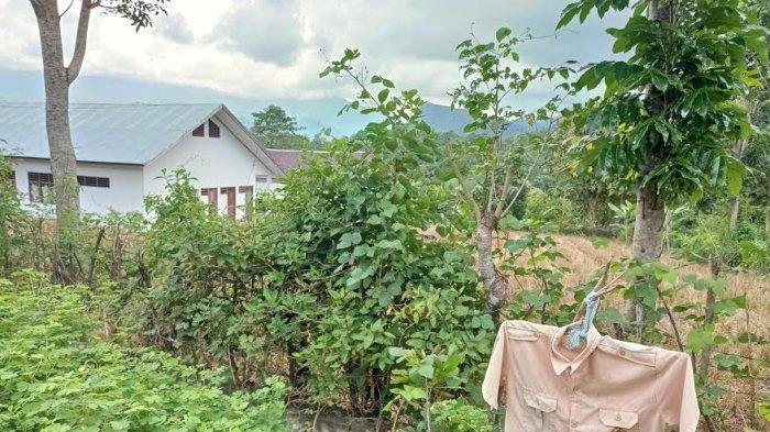 SD Transmigrasi di Desa Buttu Sawe 11 Tahun Tak Beroperasi, Kemana Guru dan Muridnya?