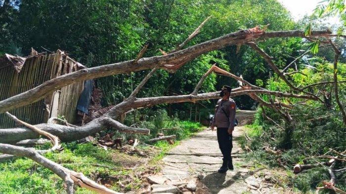 Identitas Warga Toraja Utara Tewas Tertimpa Pohon, Bekerja Sebagai Polisi Hutan