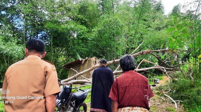Kronologi Pria di Toraja Utara Tewas Tertimpa Pohon, Hendak Bantu Tetangga