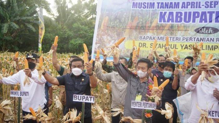 Panen Jagung Hibrida di Bone, Mentan Sebut Sulsel Alami Penurunan Sektor Pertanian