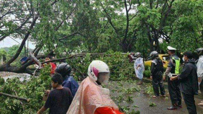 Hujan Deras Disertai Angin Kencang di Gowa, 12 Pohon Tumbang