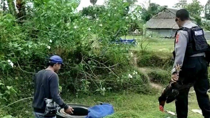 Pelaku Judi Sabung Ayam Kabur, Polisi Hanya Tangkap Seekor Ayam di Bajeng Gowa