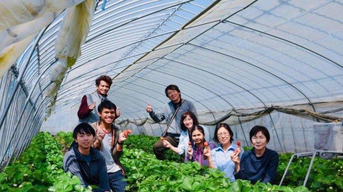 Kisah Petani Milenial Asal Rongkong Luwu Utara Bertani Strawberry di Jepang