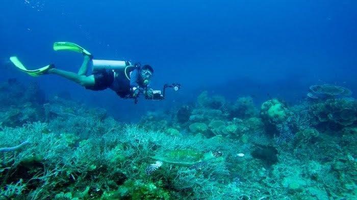 Tawarkan Pesona Alam Bawah Laut, Dinas Pariwisata Mamuju Fokus Kembangkan Ini