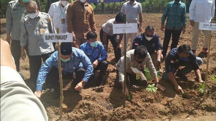 SYL Siap Garap 1.000 Hektare Lahan untuk Penanaman Porang di Pangkep
