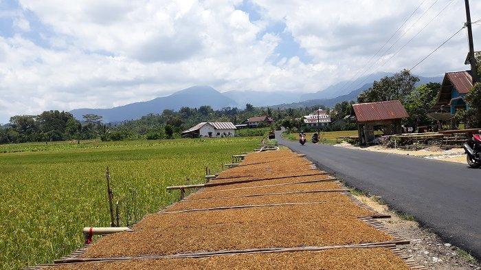 Berwisata ke Sinjai Borong Jangan Lewatkan Spot Foto Kebun Tembakau