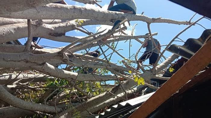 1 Rumah, 1 Kafe dan Rumah Makan Tertimpa Pohon Akibat Cuaca Buruk di Sinjai