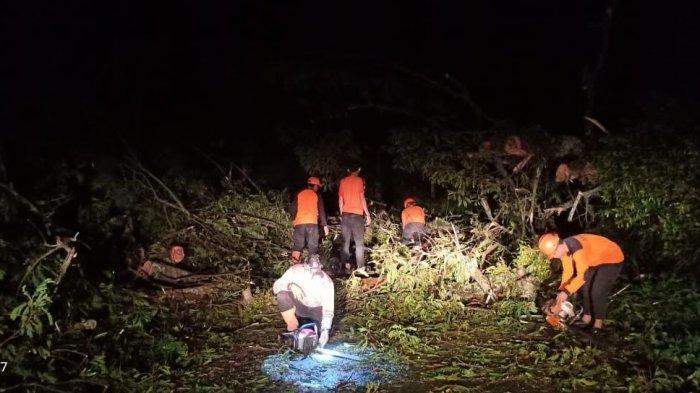 Hingga Malam BPBD Bulukumba Bersihkan Pohon Tumbang di Jalan Poros Borong Rappoa
