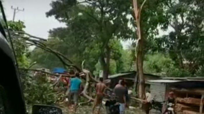 Hujan Deras Disertai Angin Kencang di Polman, Pohon Tumbang, Listrik Mati
