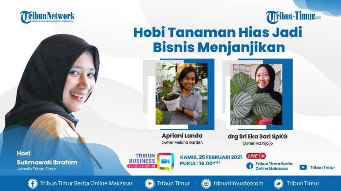 Bisnis Tanaman Hias Makin Menguntungkan di Makassar, Janda Bolong Dijual hingga Belasan Juta