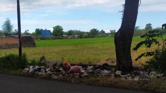 Sampah Sering Bertumpuk di Jalan Lingkar Barat, Kadis DLH Bantaeng: Mobil Pengangkut Tidak Cukup