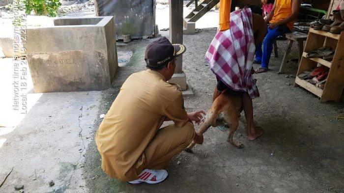 14 Juni, Dinas Peternakan Pinrang Bakal Vaksin Hewan Peliharaan