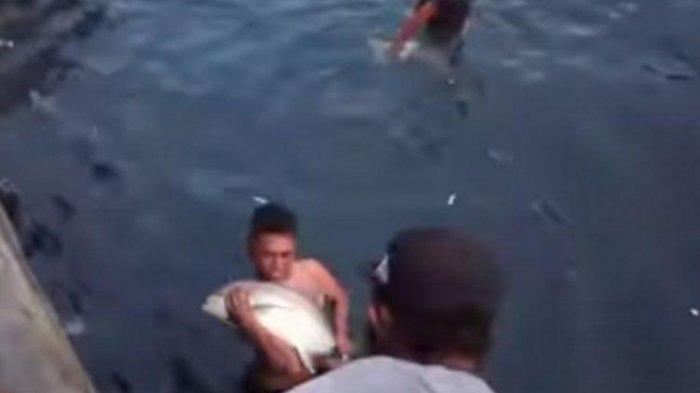 VIDEO Viral Warga Ambon Ramai-ramai Tangkap Ikan Bubara yang Terjebak di Sungai