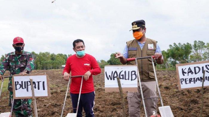 Buka Korporasi Penanaman Jagung Sidrap, Wagub Sulsel Minta Pemuda Gerakkan Kedaulatan Pertanian