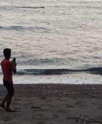 Warga Pamboang Majene Digegerkan Kemunculan Seekor Buaya di Bibir Pantai