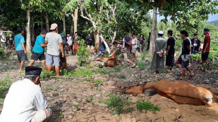 2.274 Sapi dan 249 Kambing Hewan Kurban Disembelih di Bone