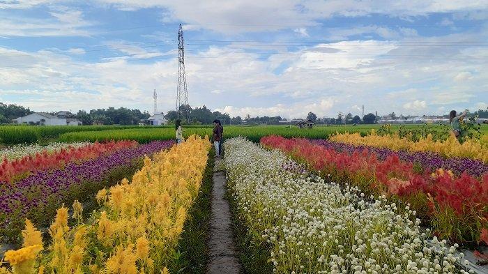Wisata Virtual Tribuners Seri 7 Syuting di Rainbow Garden