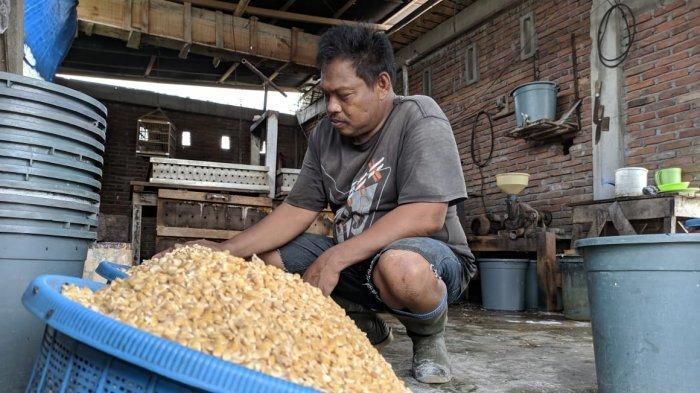 Harga Kedelai Melonjak, Pengusaha Tahu dan Tempe di Sidrap Kurangi Produksi