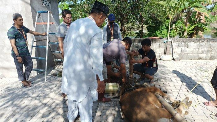 Warga Perumahan Zarindah Regency Mawang Gowa Sembelih 4 Ekor Sapi Kurban