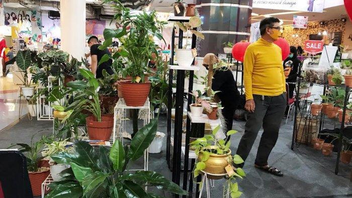 Calathea Paling Laris di StanKudara House of Plants, Harga Rp 400 Ribu