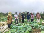 badan-ketahanan-pangan-kementerian-pertanian-berkunjung-ke-kabupaten-enrekang.jpg