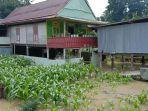 banjir-mulai-menggenangi-pemukiman-warga-di-kecamatan-sabbangparu.jpg