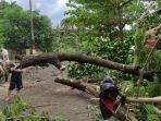 dua-warga-di-jl-traktor-komp-pu-makassar-tampak-sibuk-memotong-pohon-tumbang-tersebut.jpg