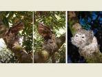 heboh-video-burung-mirip-kayu-burung-apa-itu-simak-penjelasan-lipi.jpg