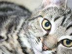 ilustrasi-kucing-07082020.jpg