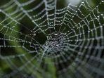 jaring-laba-laba-2162021.jpg