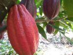 kakao-lutra.jpg<pf>kakao-klon-lutra.jpg<pf>kakao-mcc-02.jpg<pf>klon-mcc-02-atau-klon-m45.jpg
