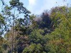 kebakaran-hutan-terjadi-di-bori-ranteletok-sesean-toraja-utara2.jpg