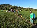 kementan-dukung-petani-samarinda-lakukan-gerakan-pengendalian-penyakit-kresek.jpg
