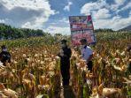 kementerian-pertanian-kementan-memberikan-bantuan-ongkos-angkut-atau-biaya-distribusi-jagung.jpg