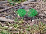 kondisi-mayat-di-sungai-walanae-bone-selasa-29122020.jpg