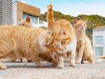 kucing-orange.jpg
