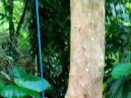 lokasi-js-25-warga-kesok-mappa-bonggakaradeng-tana-toraja-ditemukan-tewas-tergantung.jpg