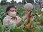 menko-airlangga-juga-ikut-memanen-hasil-pertanian-berupa-cabai-tumpang-sari-dan-melon.jpg