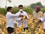 menteri-pertanian-ri-syahrul-yasin-limpo-1-2992021.jpg