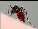 nyamuk-fogging-malaria-dbd.jpg