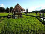objek-wisata-sawah-di-desa-tondokbakaru-mamasa-2442020.jpg