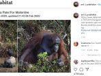 orangutan-ularkan-tangan.jpg