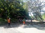 penebangan-pohon-yang-berada-di-pinggir-jalan.jpg
