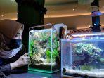 pengunjung-melihat-tanaman-yang-diatur-di-dalam-akuarium-saat-pameran-hobi-aquascape-1.jpg<pf>pengunjung-melihat-tanaman-yang-diatur-di-dalam-akuarium-saat-pameran-hobi-aquascape-2.jpg
