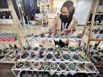 pengunjung-mengamati-aneka-koleksi-kaktus-di-toko-little-garden-882020.jpg