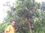 petani-cengkih-di-desa-bontosalama-kecamatan-sinjai-barat-sabtu-312021.jpg