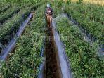 petani-menyemprotkan-cairan-pembasmi-hama-di-kebun-cabai-rawit-hijau-di-moncong-loe-1.jpg<pf>petani-menyemprotkan-cairan-pembasmi-hama-di-kebun-cabai-rawit-hijau-di-moncong-loe-2.jpg