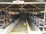 peternakan-dg-lala-samata-kabupaten-gowa-b.jpg